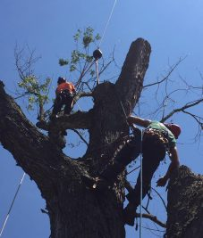 Tree Preservation 1