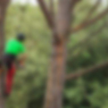 Tree Analysis